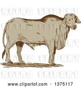 Vector Clip Art of Retro Sketched Brahman Bull Standing and Facing Right by Patrimonio
