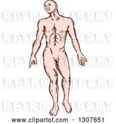Vector Clip Art of Retro Sketched Nude White Guy by Patrimonio