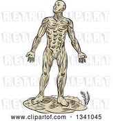 Vector Clip Art of Retro Sketched or Engraved Anatomical Guy of Muscle by Patrimonio