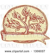 Vector Clip Art of Retro Sketched or Engraved Olive Tree in an Oval over a Blank Ribbon by Patrimonio