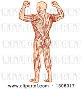 Vector Clip Art of Retro Sketched or Engraved Rear View of a Flexing Guy with Visible Muscles by Patrimonio