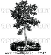 Vector Clip Art of Retro Sugar Maple Tree by Prawny Vintage