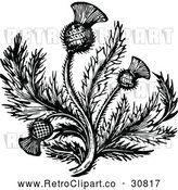 Vector Clip Art of Retro Thistle Flower 2 by Prawny Vintage