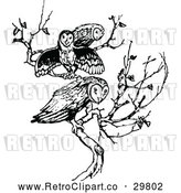 Vector Clip Art of Retro Trio of Owls on a Branch by Prawny Vintage