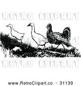 Vector Clip Art of Retro Turkey with Geese by Prawny Vintage