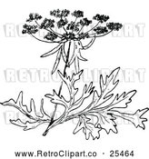 Vector Clip Art of Retro Wild Carrot Blossom by Prawny Vintage