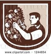Vector Clip Art of Retro Woodcut Farmer Pruning Apple Trees in a Shield by Patrimonio