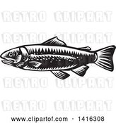 Vector Clip Art of Retro Woodcut Spotted Trout Fish by Patrimonio