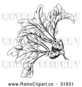Vector Clip Art of Retro Woodcut Styled Beet in Black and White by AtStockIllustration