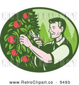 Vector Clipart of a Retro Woodcut Farmer Pruning Apple Trees in an Orchard on White by Patrimonio