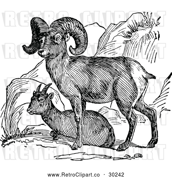 Vector Clip Art of a Retro Bighorn Sheep Pair
