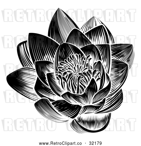 : Vector Clip Art of a Retro Black Blooming Waterlily Lotus Flower