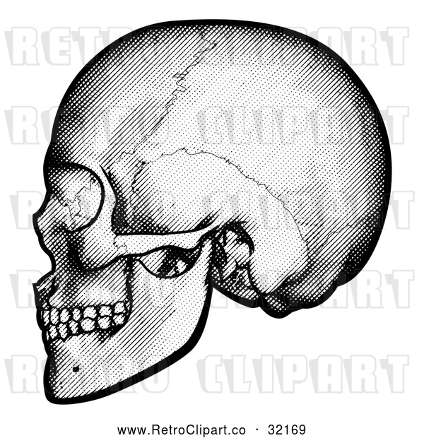 Vector Clip Art of a Retro Black Human Skull in Profile
