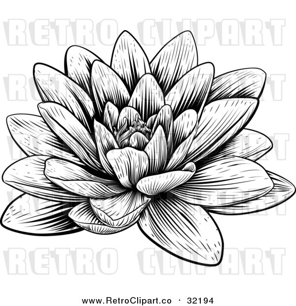 Vector Clip Art of a Retro Blooming Waterlily Lotus Flower