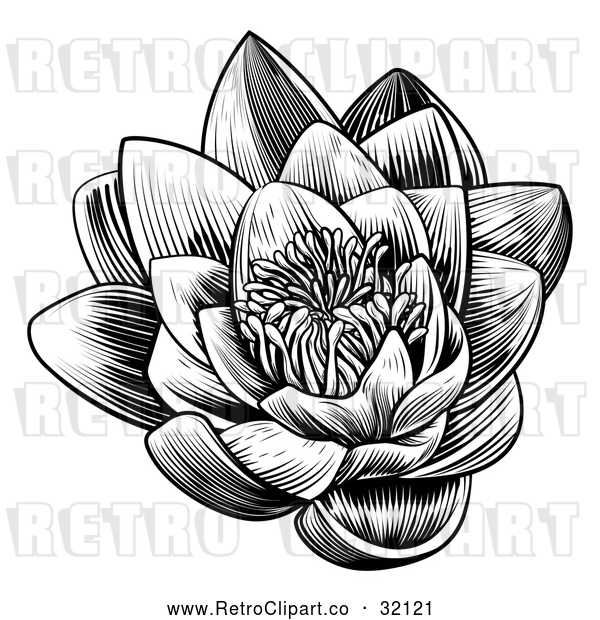 Vector Clip Art of a Retro Blooming Waterlily Lotus Flower in Black Lineart
