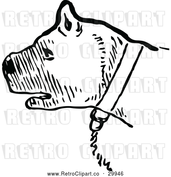 Vector Clip Art of a Retro Chained Pit Bull - Black and White