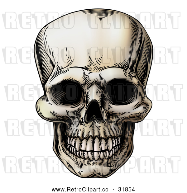 : Vector Clip Art of a Retro Human Skull Grinning