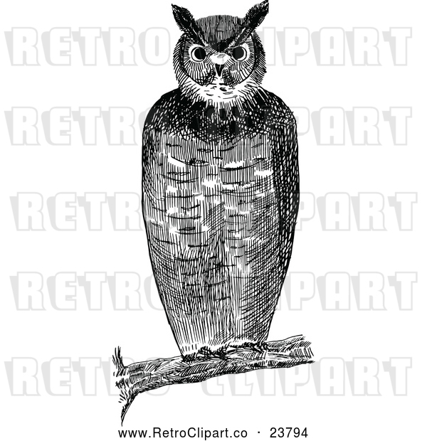 Vector Clip Art of a Retro Owl Resting on Branch