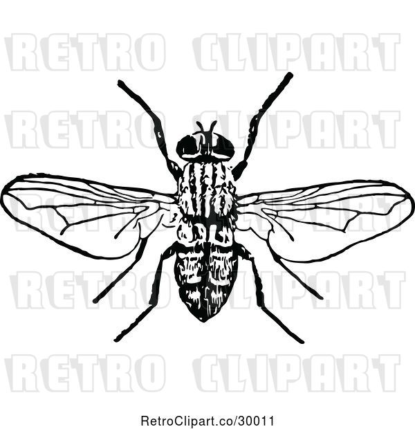 Vector Clip Art of Bee 1
