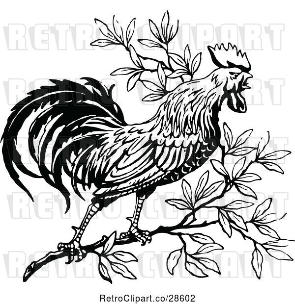 Vector Clip Art of Crowing Rooster in a Tree