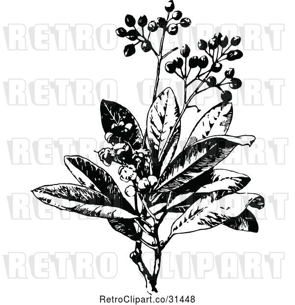 Vector Clip Art of Retro Allspice Plant