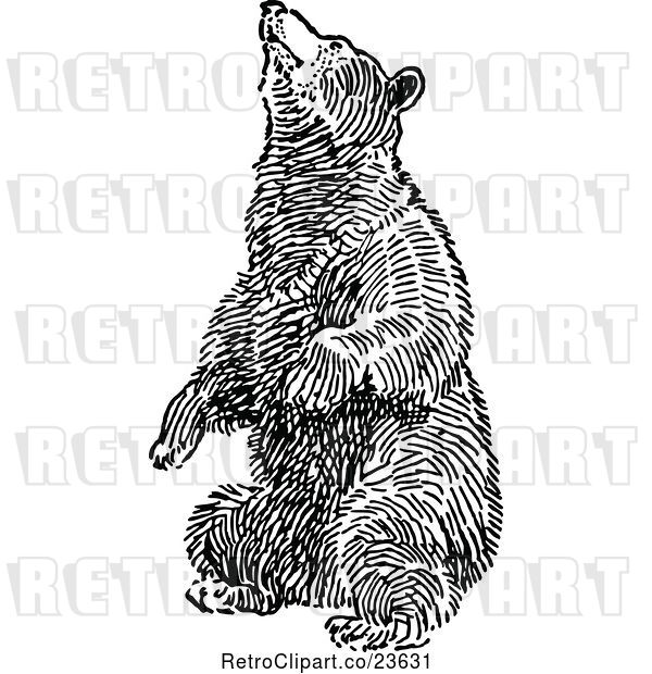 Vector Clip Art of Retro Bear Balancing on Its Hind Legs