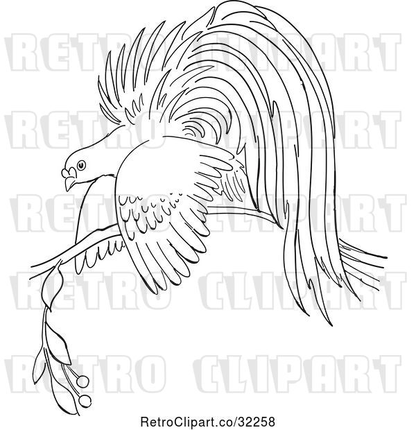 Vector Clip Art of Retro Cartoon Bird of Paradise on a Branch Line Drawing
