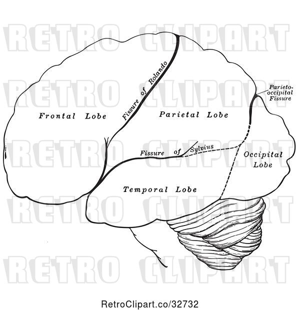 Vector Clip Art of Retro Cartoon Diagram of the Hemispheres of the Human Brain
