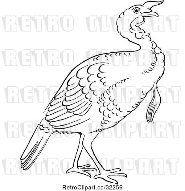 Vector Clip Art of Retro Cartoon Gobbler Thanksgiving Turkey Bird Line Drawing