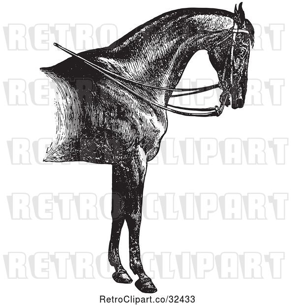 Vector Clip Art of Retro Engraved Horse Anatomy of a Reined Horse with Good Shoulders in