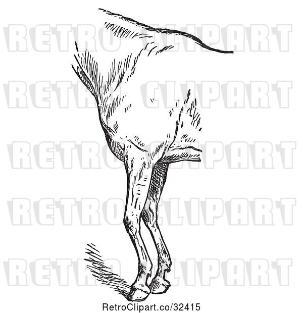 Vector Clip Art of Retro Engraved Horse Anatomy of Bad Conformation of Fore Quarters in 4
