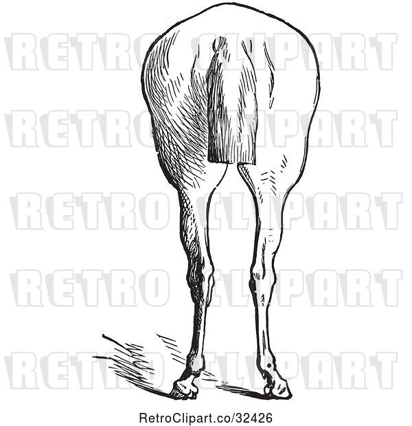 Vector Clip Art of Retro Engraved Horse Anatomy of Bad Hind Quarters in 9