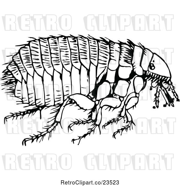 Vector Clip Art of Retro Flea