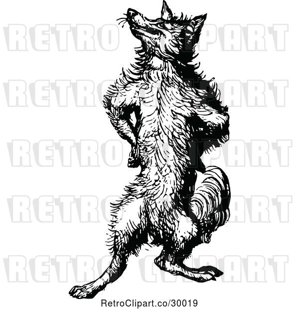 Vector Clip Art of Retro Fox Standing Upright and Posing
