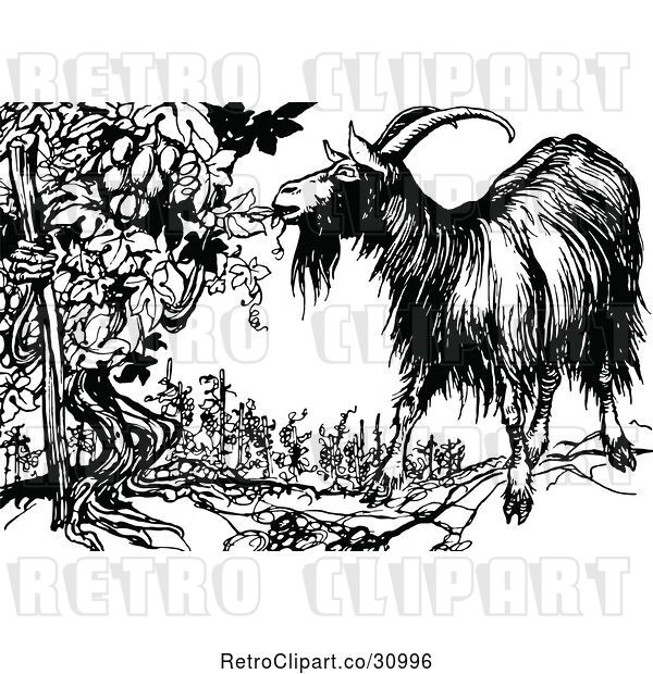 Vector Clip Art of Retro Goat Eating from an Ent Grape Vine