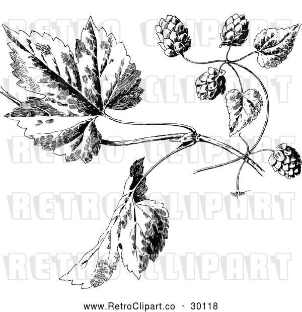 : Vector Clip Art of Retro Hops and Leaves