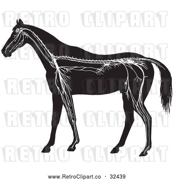 Vector Clip Art of Retro Horse Anatomy of the Nervous System in Black and White