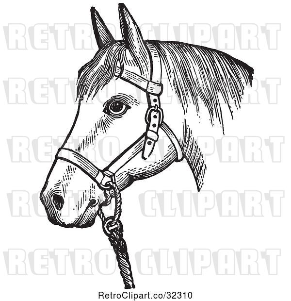 Vector Clip Art of Retro Horse with Good Form for a Halter of in