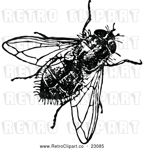 Vector Clip Art of Retro House Fly