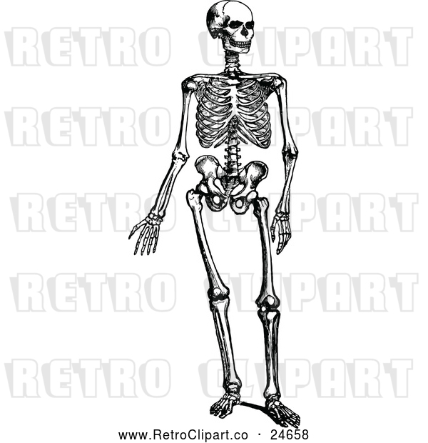 Vector Clip Art of Retro Human Skeleton