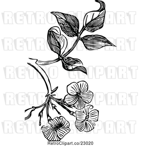 Vector Clip Art of Retro Jasmine Blossom Design Element