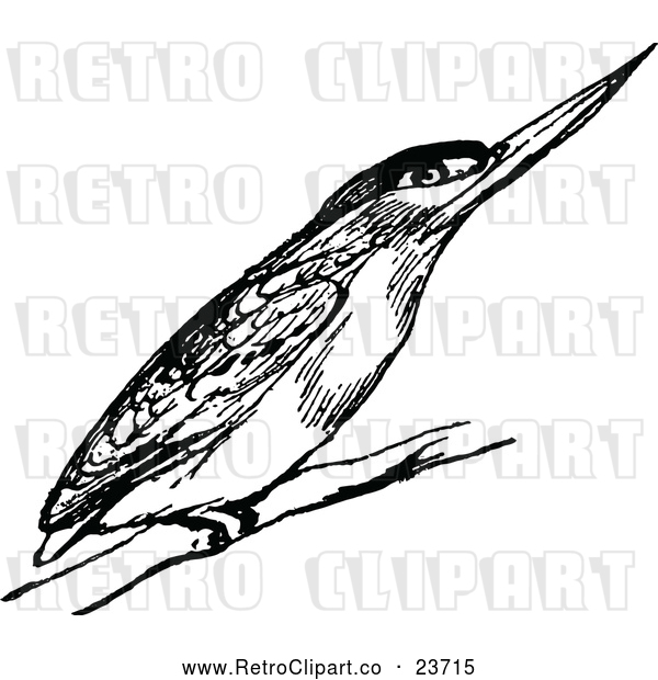 : Vector Clip Art of Retro Kingfisher Bird