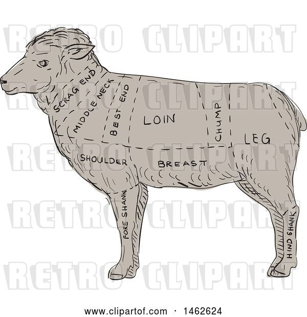 Vector Clip Art of Retro Lamb Profile Showing Cuts of Meat, in Drawing Sketch Style