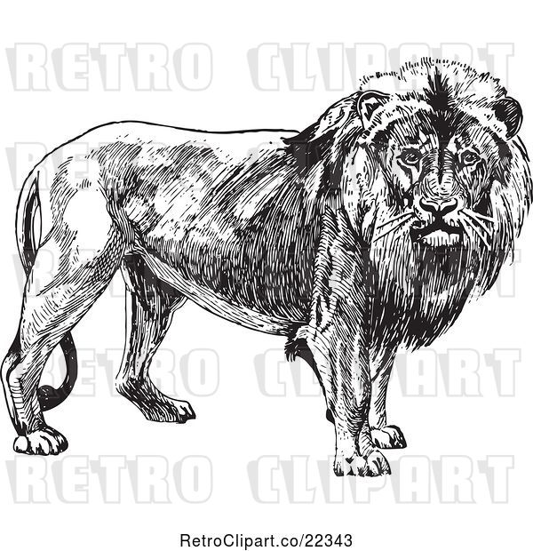 Vector Clip Art of Retro Male Lion