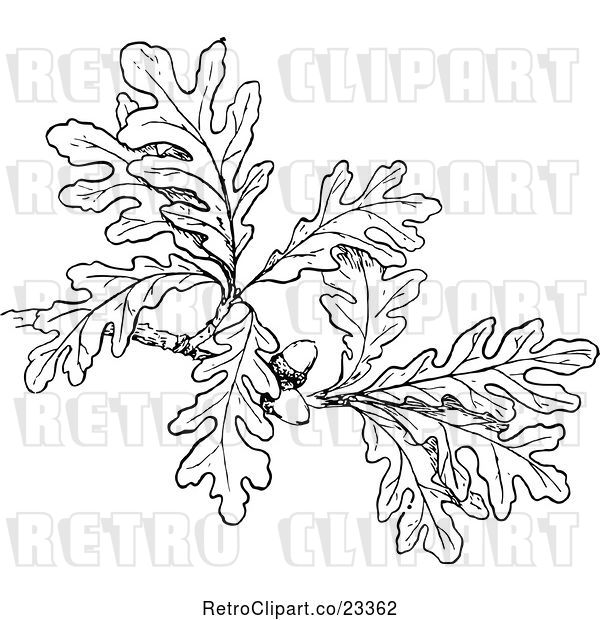 Vector Clip Art of Retro Oak Branch with Leaves and Acorns