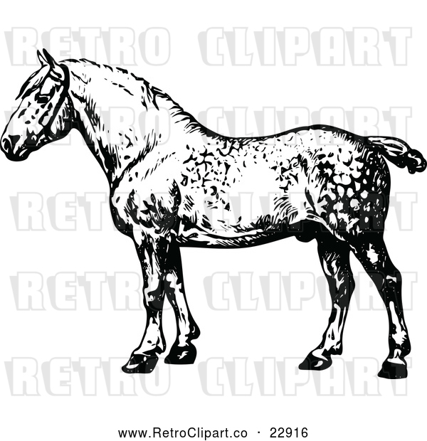 : Vector Clip Art of Retro Percheron Horse