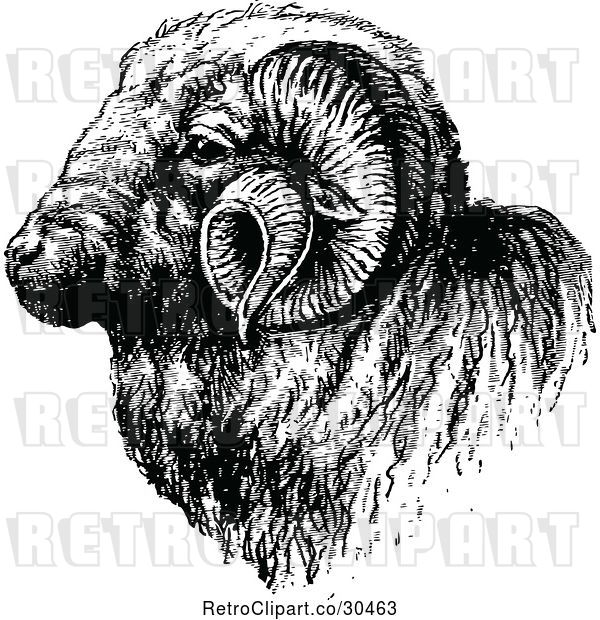 Vector Clip Art of Retro Ram Head
