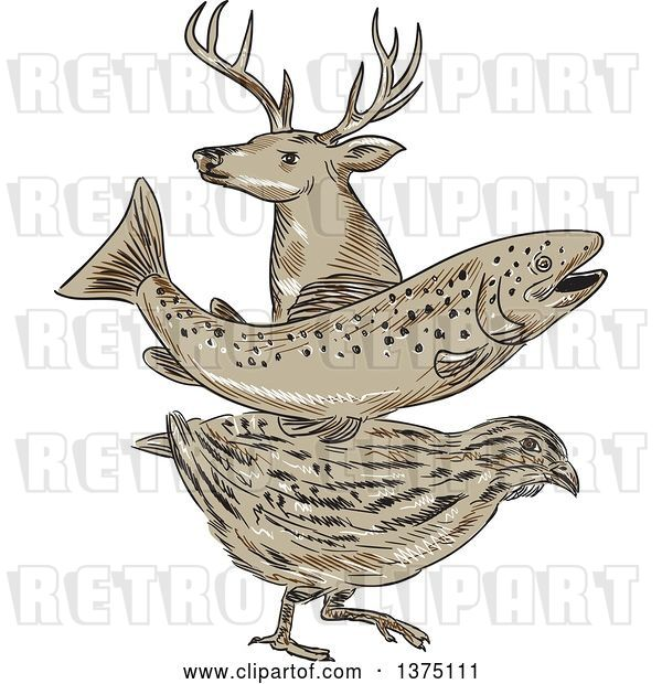 Vector Clip Art of Retro Sketch of a Deer Buck, Trout Fish and Quail
