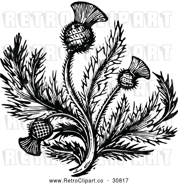 : Vector Clip Art of Retro Thistle Flower 2