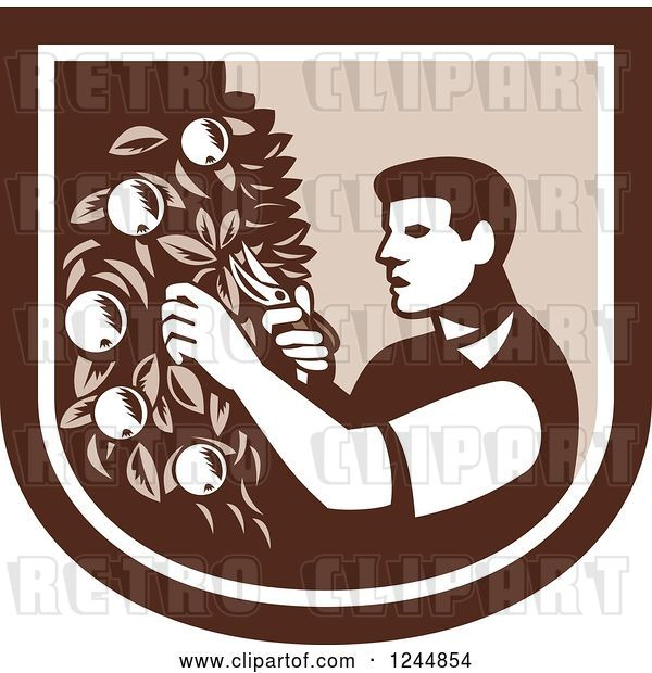 Vector Clip Art of Retro Woodcut Farmer Pruning Apple Trees in a Shield